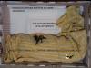 scatola per giovani pipistrelli