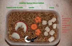 camole della farina alimentate correttamente con crusca, mela e carota