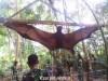 Perù, catturato pipistrello gigante