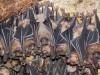 Philippine, la bat-caverna con 1,8 milioni di pipistrelli