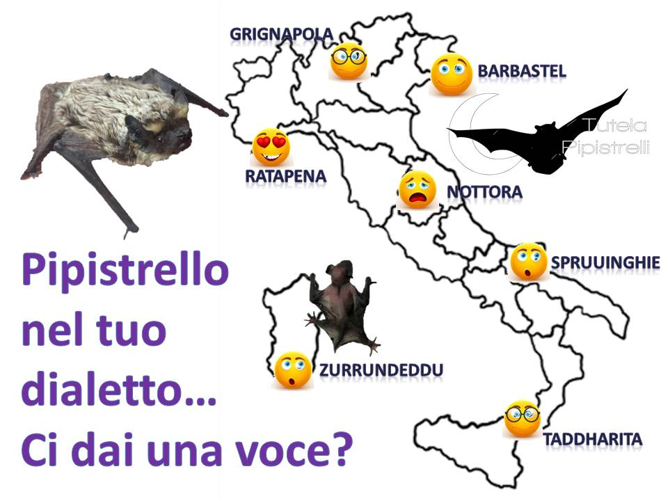 I pipistrelli nei dialetti italiani